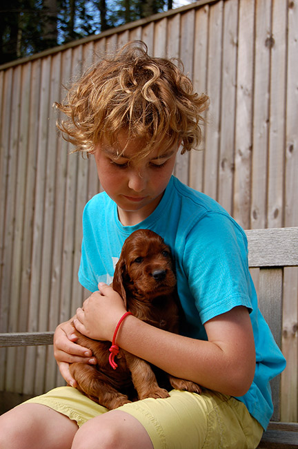 Irish Setter Puppy Lettie aged 8 weeks with her friend