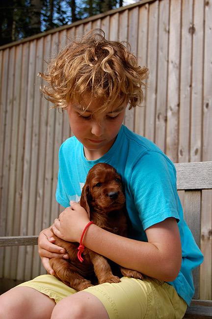 Irish Setter Puppy Lettie aged 8 weeks with her friend