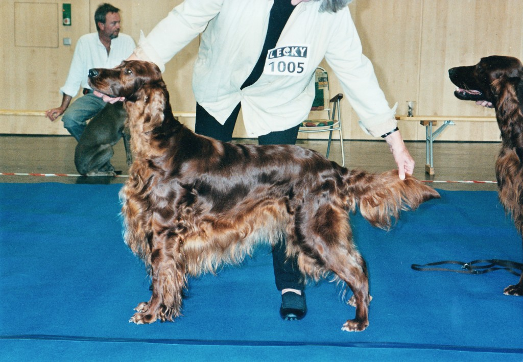 Lizzie - Int.Ger.Ch. Carnbargus Contentment, a very successful working Irish Setter