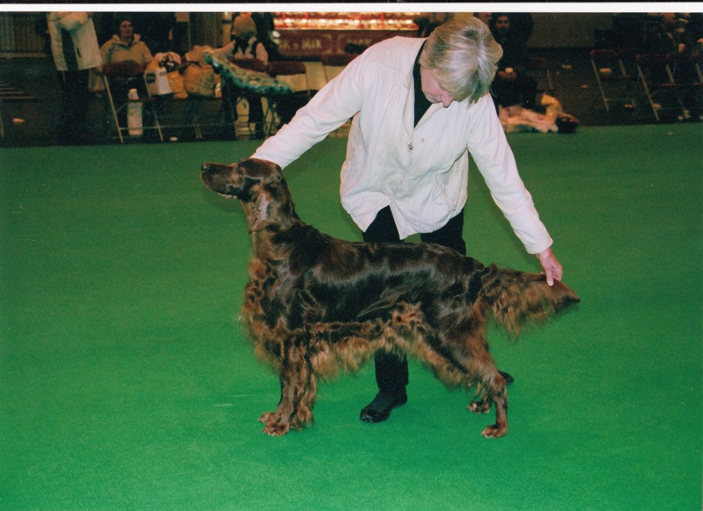 Irish Setter Lizzie - - Int.Ger.Champion Carnbargus Contentment wins the Special Working Class, Crufts 2006.