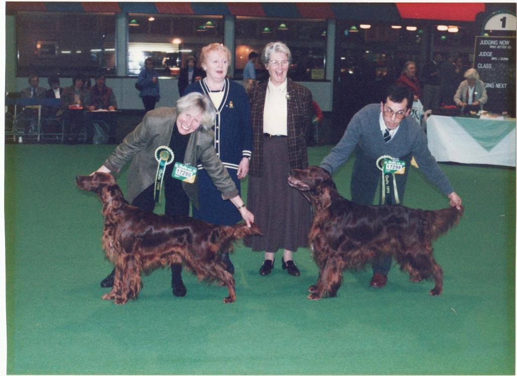 Lottie - Sh. Ch. Carnbargus Continuity wins Best Irish Setter Bitch, Crufts 1998.