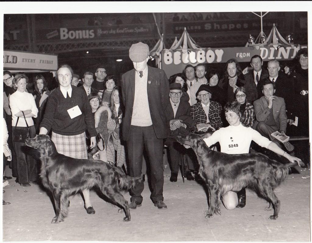 Show Champion Carnbargus Hartsbourne O'Brady wins Irish Setter Best of Breed at Crufts, 1972