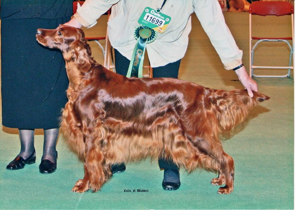 Sadie - Sh.Ch. Carnbargus Congratulation JW - wins Best of Breed, Crufts 2005